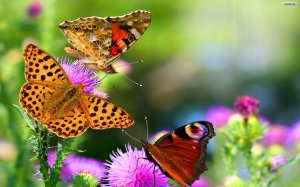 sweet-butterfly-and-flower-wallpapers
